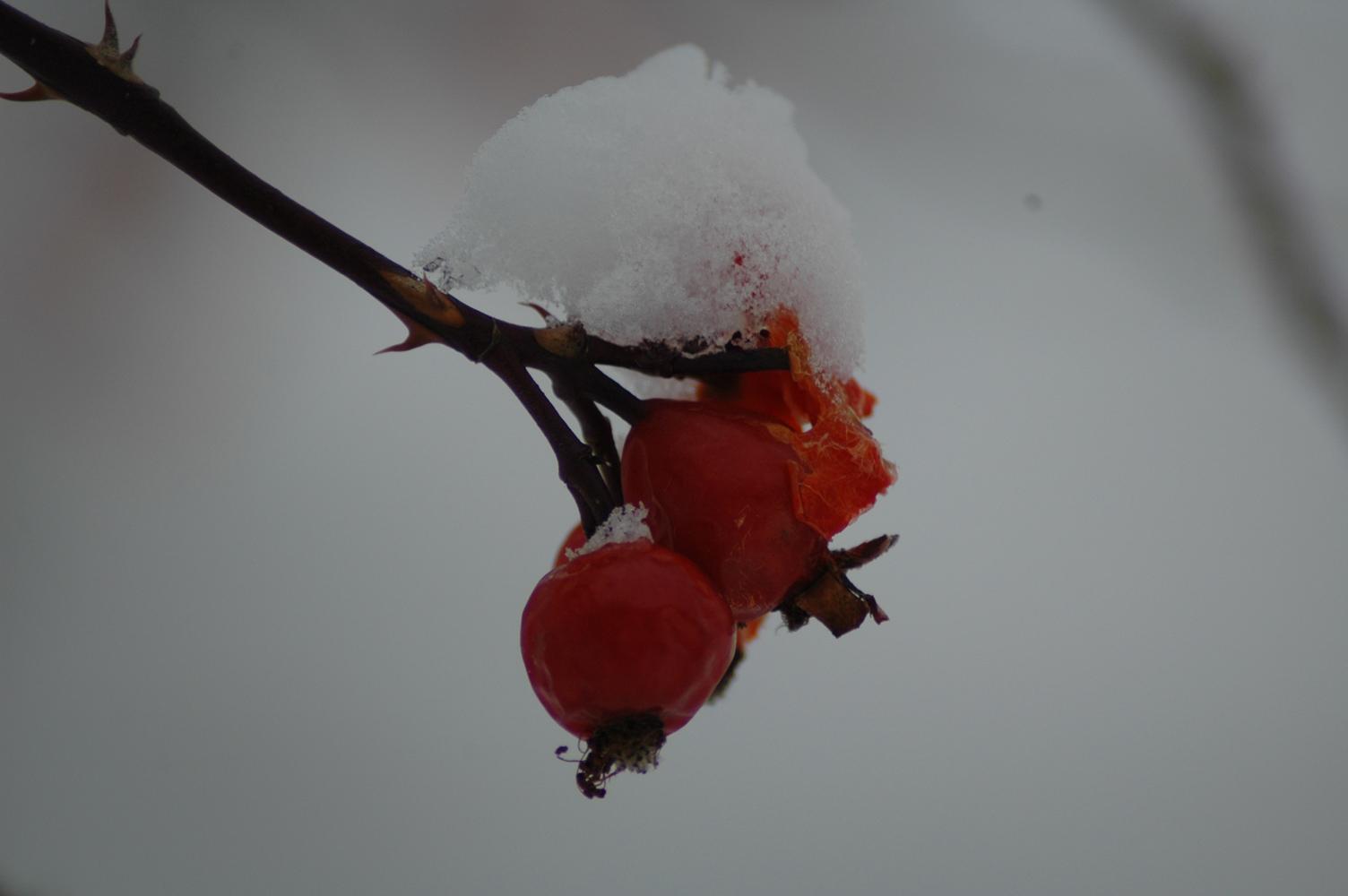 Baer-i-sne..